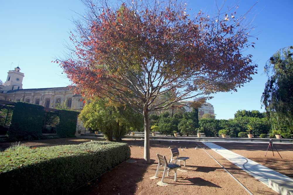Jardín de las Hespérides
